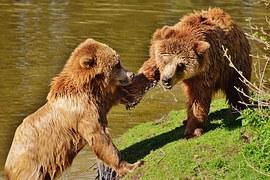 medve pofon